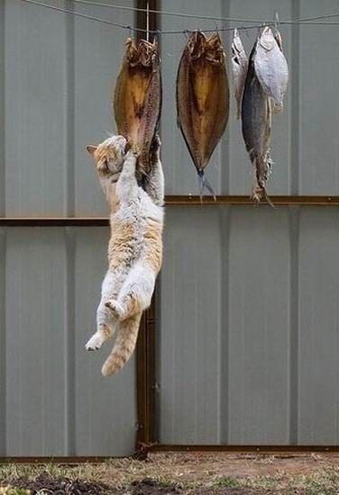 猫の画像 p1_34